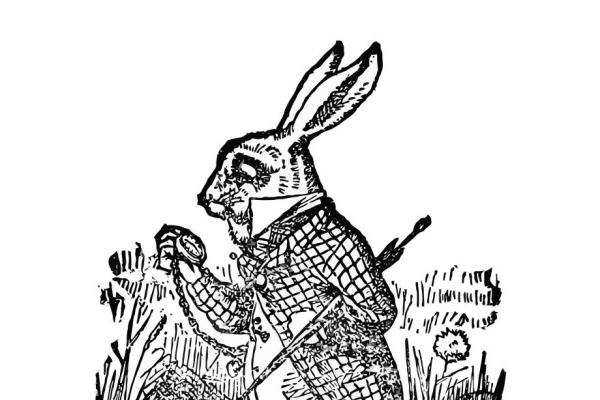 2d06a7c01bd1c46ae97d4a97a82e7c4a white rabbit