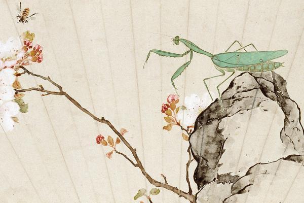 Praying mantis, bee, and prunus blossom