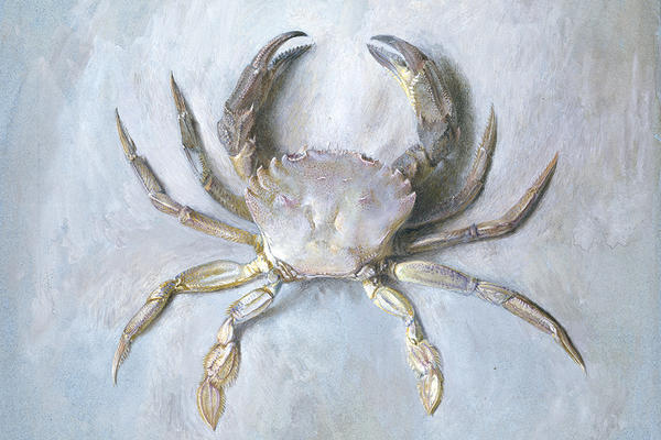A watercolour painting of a purple crab on similar colour backgroun