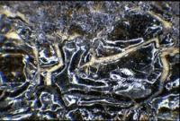 Detail x18 magnification
